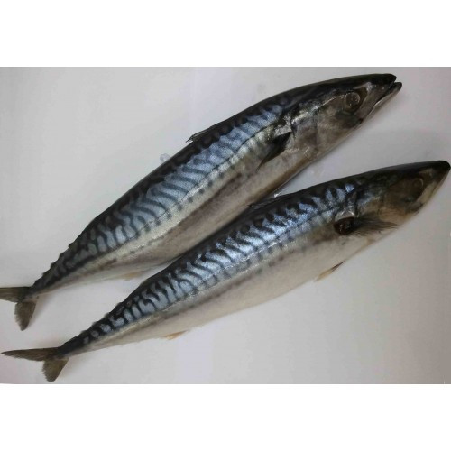 Saba Fish with Teriyaki Sauce - YouTube